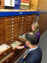 Conservator Sarah Finney showing the Sedgwick Museum's fossil collections