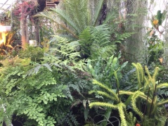 Tropical ferns in the Reserve Glasshouses
