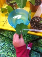 Children testing water proof plant surfaces
