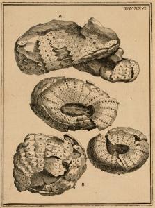 Plate XXVI of 'La vana speculazione'