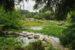Cambridge University Botanic Garden Lake. Image: Howard Rice